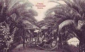 Пальмовая аллея в Гагре
