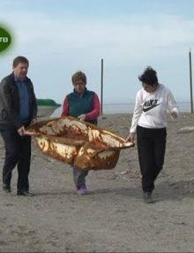 Жители микрорайона Кемпинг своими силами ведут работы по благоустройству пляжной зоны