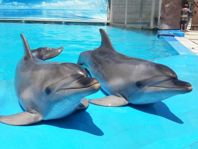 Дельфинарий в Пицунде