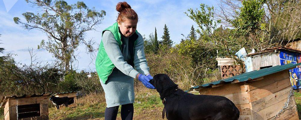 В Гагре открылся фонд помощи для бездомных собак