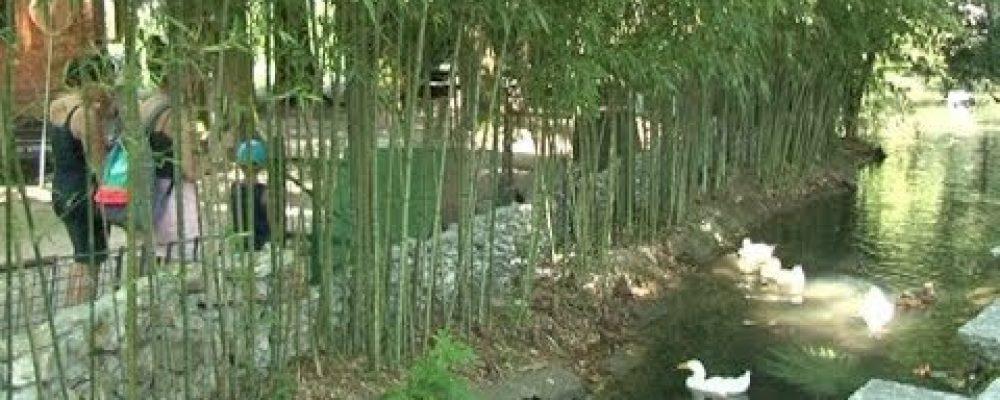 В Гагрском Приморском парке ведутся работы по благоустройству и озеленению территории